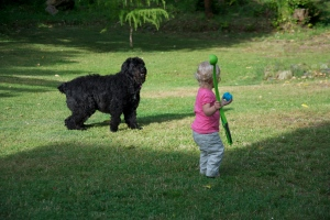 Throwing the ball for your dog