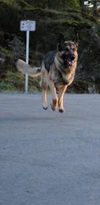 Ben Kersen - Dog Safety